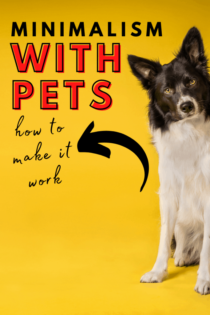 Can minimalist actually practice minimalism with pets? You know it! Here are some easy to execute strategies on how to keep your furry friend